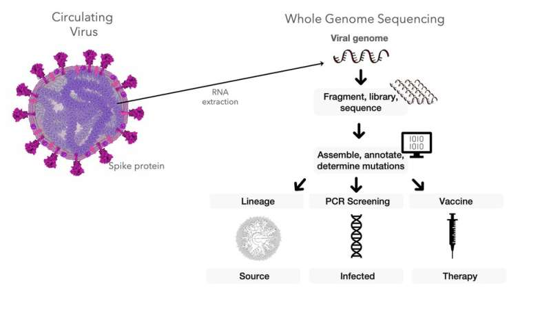 Where coronavirus variants emerge, surges follow – new research suggests how genomic surveillance can be an early warning system