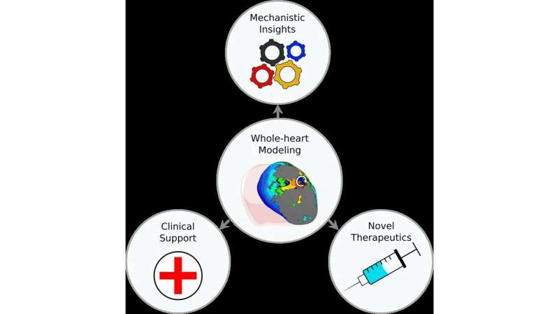 Whole-heart computational modeling provides insights for individualized treatment