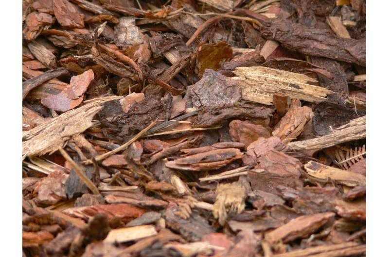 Why scientists want to turn tree bark and compost into aircraft wings and plastic bags