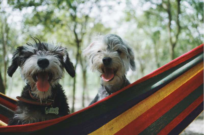 Why dogs can teach humans about healthier ageing