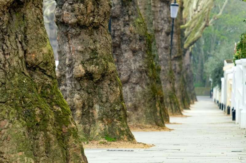 Why keeping one mature street tree is far better for humans and nature than planting lots of new ones