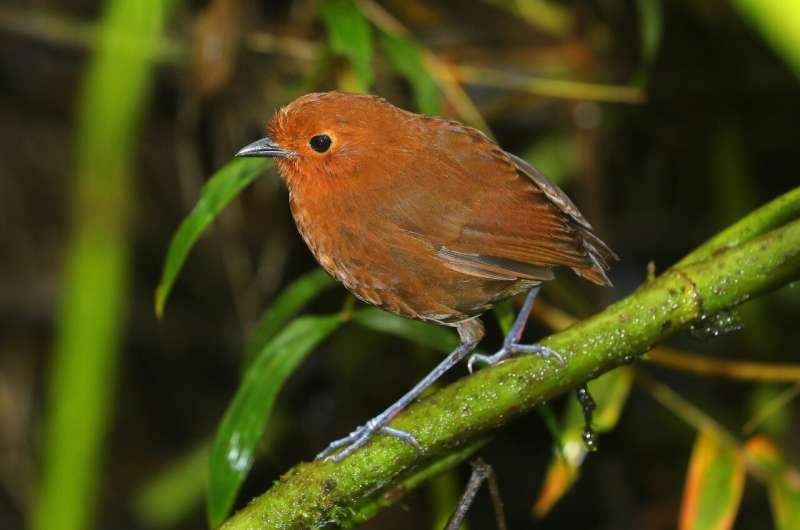 Why lists of worldwide bird species disagree