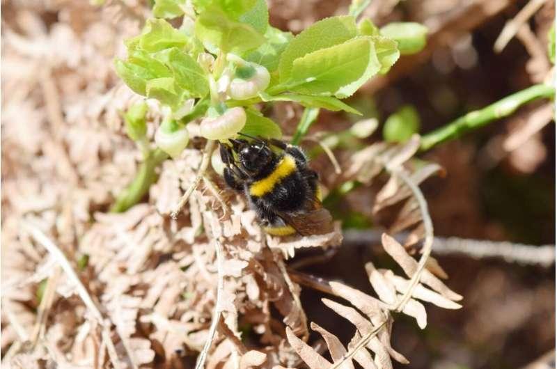 Las abejas silvestres necesitan madera muerta en el bosque