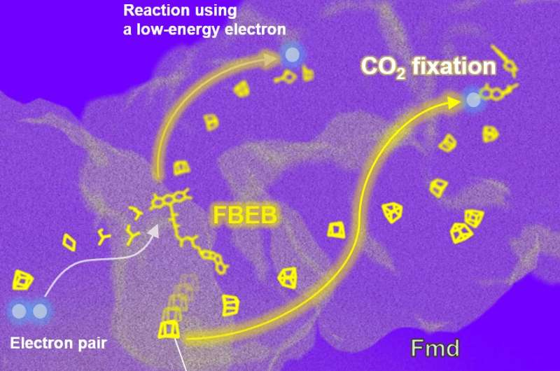 Wired for efficiency: How methanogenic microbes manage electrons