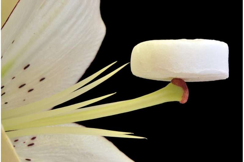 With a kitchen freezer and plant cellulose, an aerogel for therapeutic use is developed