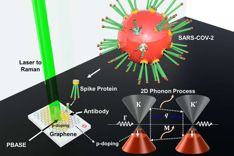 'Wonder material' can be used to detect COVID-19 quickly, accurately