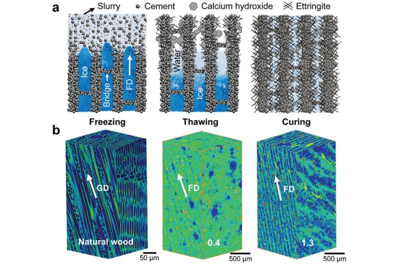 Wood-inspired cement with high strength and multifunctionality