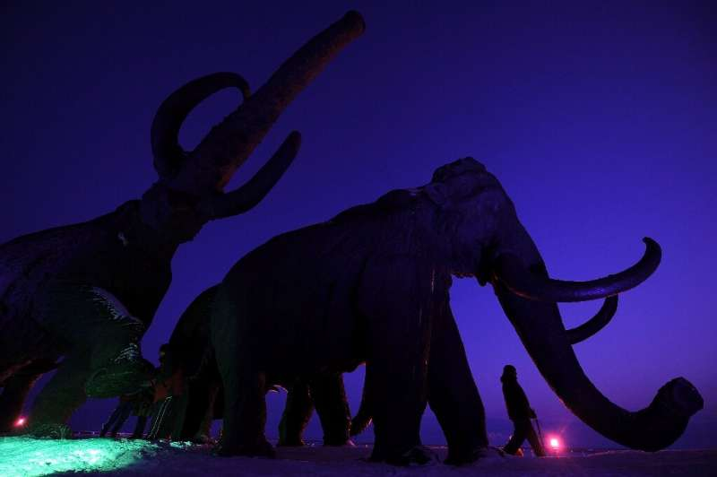 Woolly mammoths may yet walk the Arctic again, if  biosciences firm Colossal is able to use gene-editing techniques to bring bac