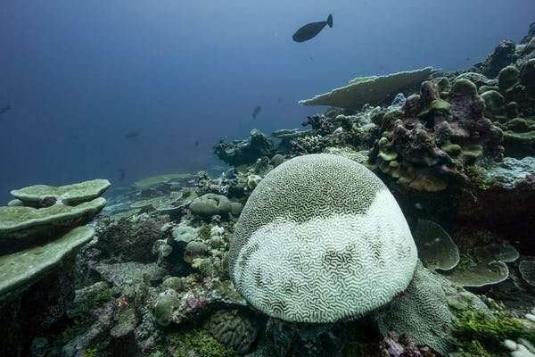 World's coral scientists warn action is needed now to save even a few reefs from climate change