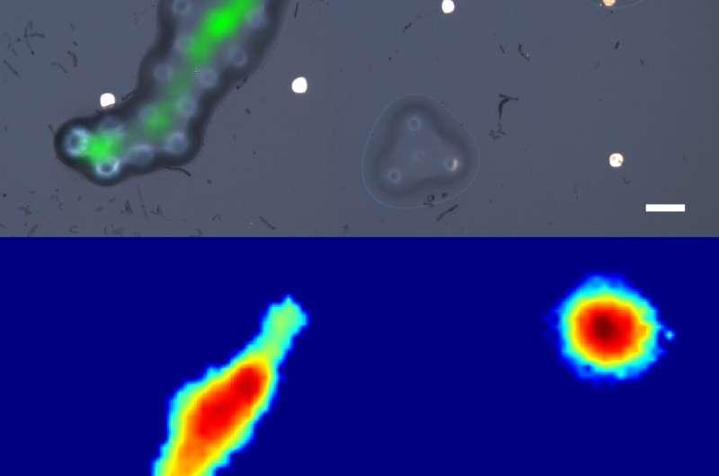 World's first fibre-optic ultrasonic imaging probe for future nanoscale disease diagnostics