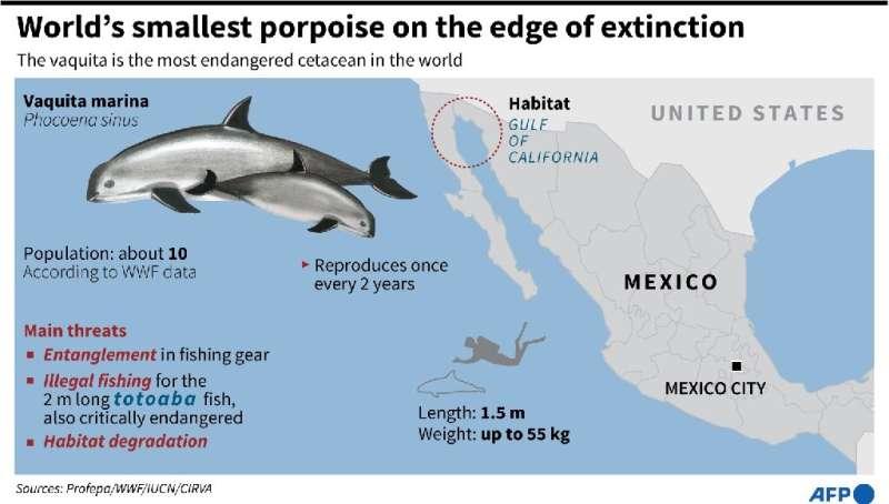World's smallest porpoise on the edge of extinction