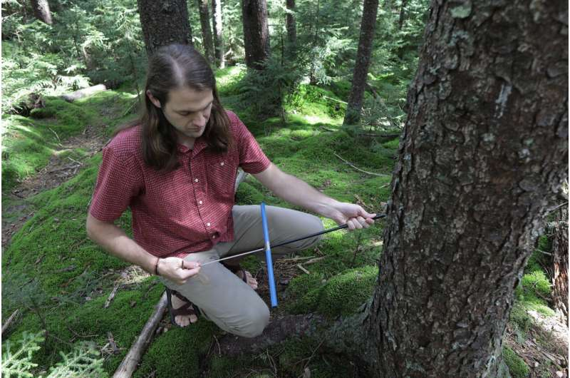 WVU biologists uncover forests' unexpected role in climate change