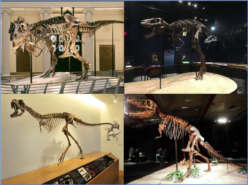 Younger Tyrannosaurus Rex bites were less ferocious than their adult counterparts
