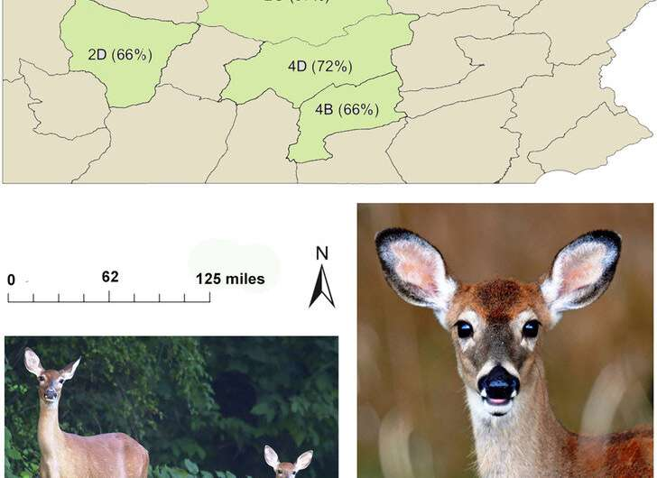 Young white-tailed deer that disperse survive the same as those that stay home