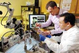Study reveals neural basis of rapid brain adaptation