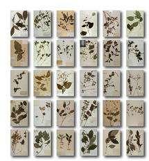 35,000 new species 'sitting in cupboards'
