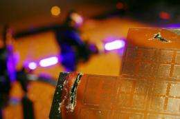Researchers create new class of piezoelectric logic devices using zinc oxide nanowires