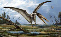 Scientists find 95-million-year-old pterosaur fossil in Morocco