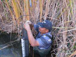 Researchers study effect of yuma desalting plant on Cienega de Santa Clara