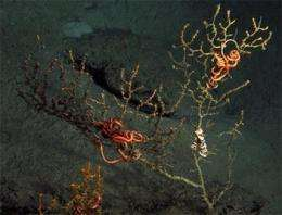 Scientists find damage to coral near BP well (AP)