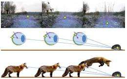 Predation by foxes aided by Earth's magnetic field
