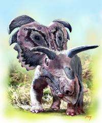 Scientists announce new horned dinosaur