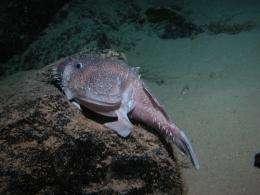 Hawaiian submarine canyons are hotspots of biodiversity and biomass for seafloor animal communities
