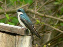 Humidity changes color of birds' feathers, biologists discover