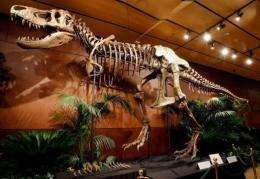 """A 66-million-year-old Tyrannosaurus rex skeleton dubbed """"Samson"""""""