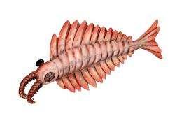 Ancient shrimp monster not so fierce after all