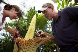 A rare rainforest plant blooms at Harvard