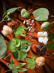 ARS Plant Collections Help Safeguard Crops