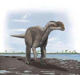 Australia's biggest carnivorous dinosaur forced to take a walk