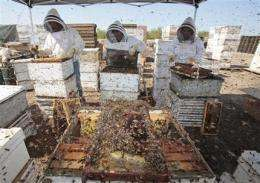 Bees in more trouble than ever after bad winter (AP)