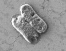 Bile sends mixed signals to E. coli