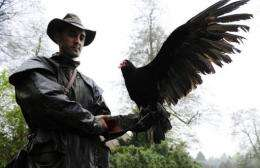 Bird trainer German Alonso shows off Sherlock, a Turkey vulture currently being trained to detect human remains