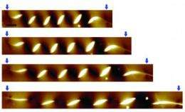Coiled nanowires may hold key to stretchable electronics