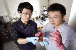 Creasing to cratering: Voltage breaks down plastic