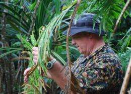 Cycad pest uses small size to hide from predators