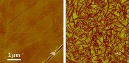 Depth Charge: Using Atomic Force Microscopy to Study Subsurface Structures