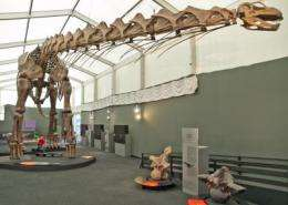 Dinosaur research: Chew and stay small