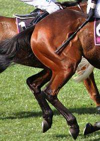 Futility of whipping racehorses revealed in study