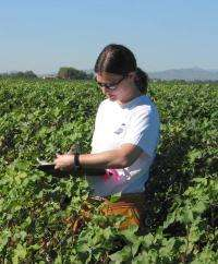 Gene transfer from transgenic crops: A more realistic picture