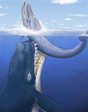 Giant predatory whale named for 'Moby Dick' author (AP)