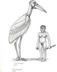Giant stork once roamed Indonesian island (AP)
