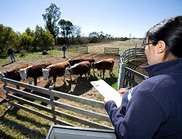 How farm animals 'feel' contributes to productivity