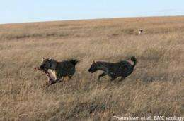 Hyenas' laughter signals deciphered