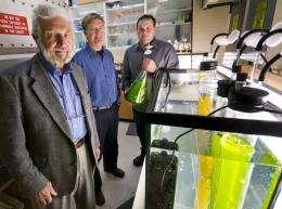 Baking soda dramatically boosts oil production in algae