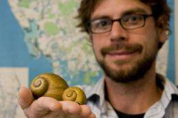 Invasive snail may damage diet of rare Everglades bird