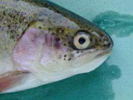 Key nutrient found to prevent cataracts in salmon